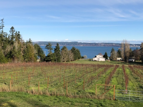 Beautiful day looking out over the Marrowstone Vineyards