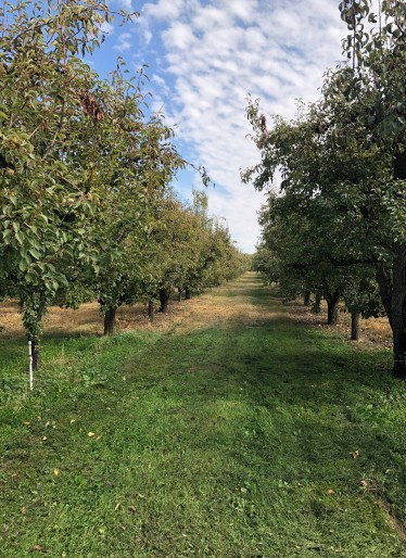 Beautiful orchards all around the Yakima County area