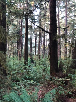Beautiful coastal trees of the Olympic National Park