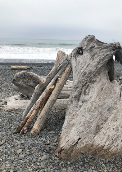 Driftwood in repose...