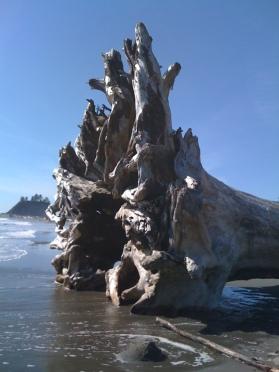 Amazing driftwood displays on Rialto Beach