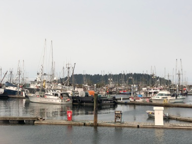 Many seafaring vessels in the Neah Bay harbor