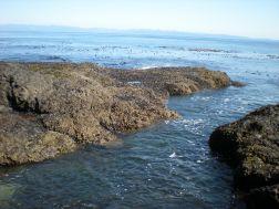 Cool tidal pools in the Salt Creek area