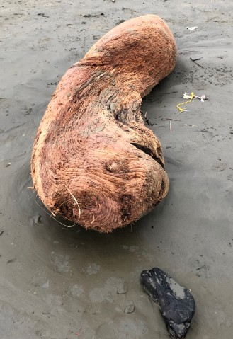 Sea creature or driftwood?