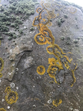 Lichen tattoos on the stones