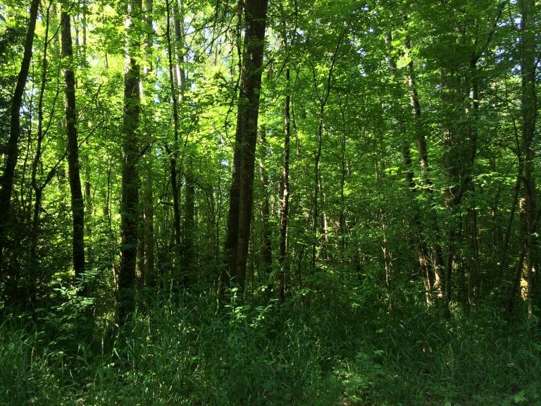 The North Creek Trail