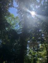 Beautiful trees near Scriber Lake