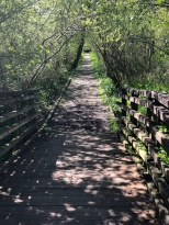 The trail near Scriber Creek