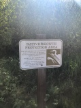 Protected native growth area next to Lake Goodwin - check out the trail!