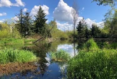Scriber Creek