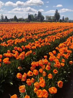 Gorgeous Orangeous!
