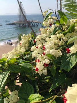 Beautiful flowers on the deck with the Los Muertos Pier in the background