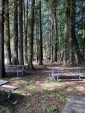 Trees and picnics!