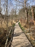 Lovely boardwalk path through the Millersylvania State Park wetlands