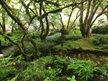 The beautiful Japanese Gardens