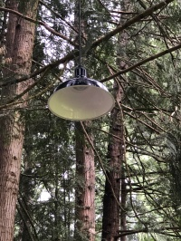 The exotic hanging lamp tree