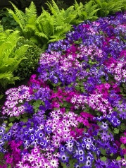 Follow the purple path!