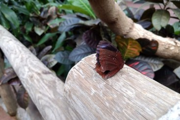 Beautiful butterfly action! (Photo credit: K. Spoor)