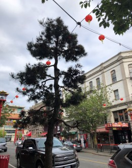 So much to see and do in Chinatown