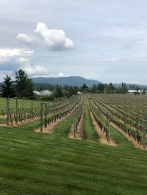 Beautiful vineyards at Church & State