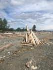 'Lots of uses for driftwood along the beach