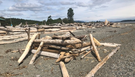 So much cool driftwood!