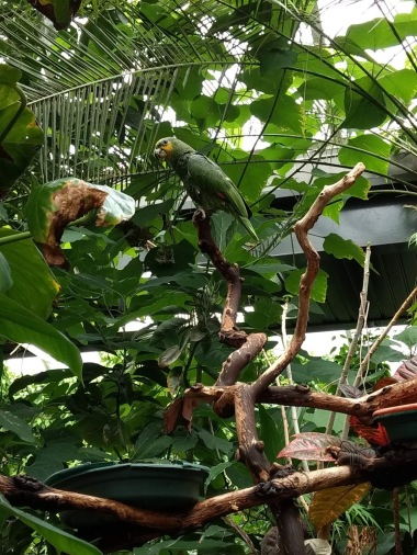 Butterflies AND parrots! (Photo credit: K. Spoor)