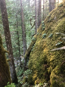 Beautiful moss and giant rocks near Nooksack Falls