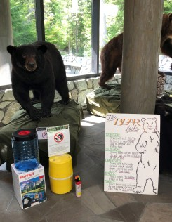 There are bears in the area - learn all the facts!