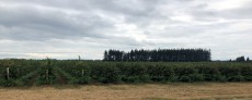 Raspberry farms surround the Lynden area - Delicious!