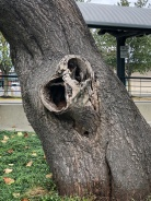CLOSE UP on evil tree...