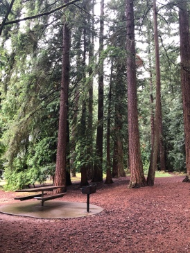 Great spots for picnics at Whatcom Falls Park