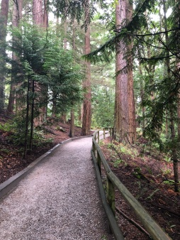 Great trails at Whatcom Falls Park