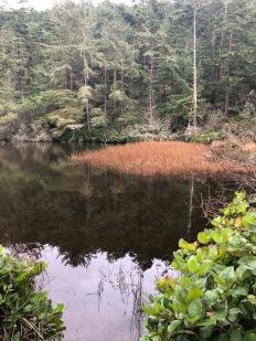 Lake Pondilla. (aka: PondZILLA!)