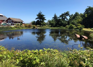 The lovely pond and gardens at Greenbank Farm