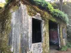 Peeking around corners, covered in ferns...
