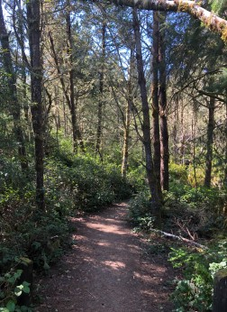 Lovely hiking trails in the area