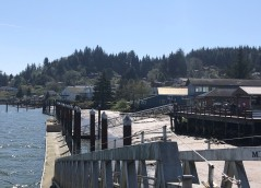 Looking up to town from the Willapa River