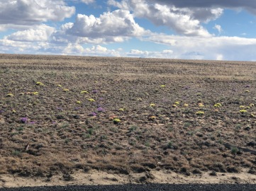 The high desert is stark, but still filled with colorful bursts of life