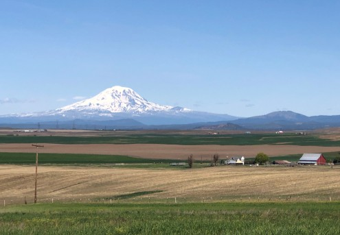 Glorious Mt. Adams as seen from Goldendale