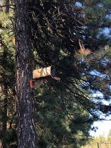 I'd like my mail sent to this Ponderosa pine, please. Thanks!