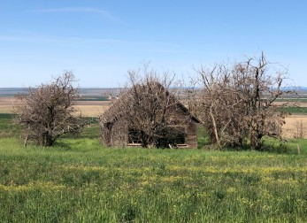 Early homestead in the Goldendale area